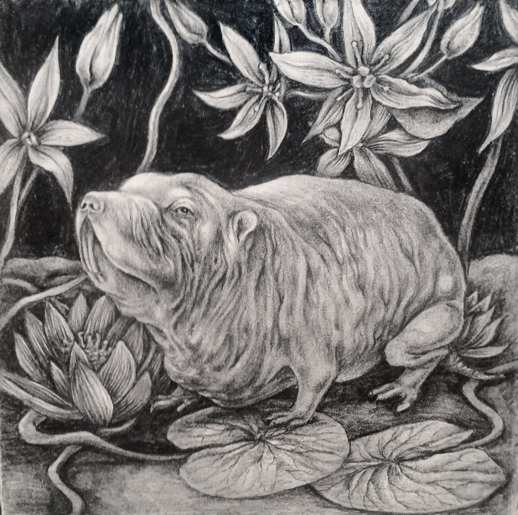 Naked rat and water lilies 20x20cm