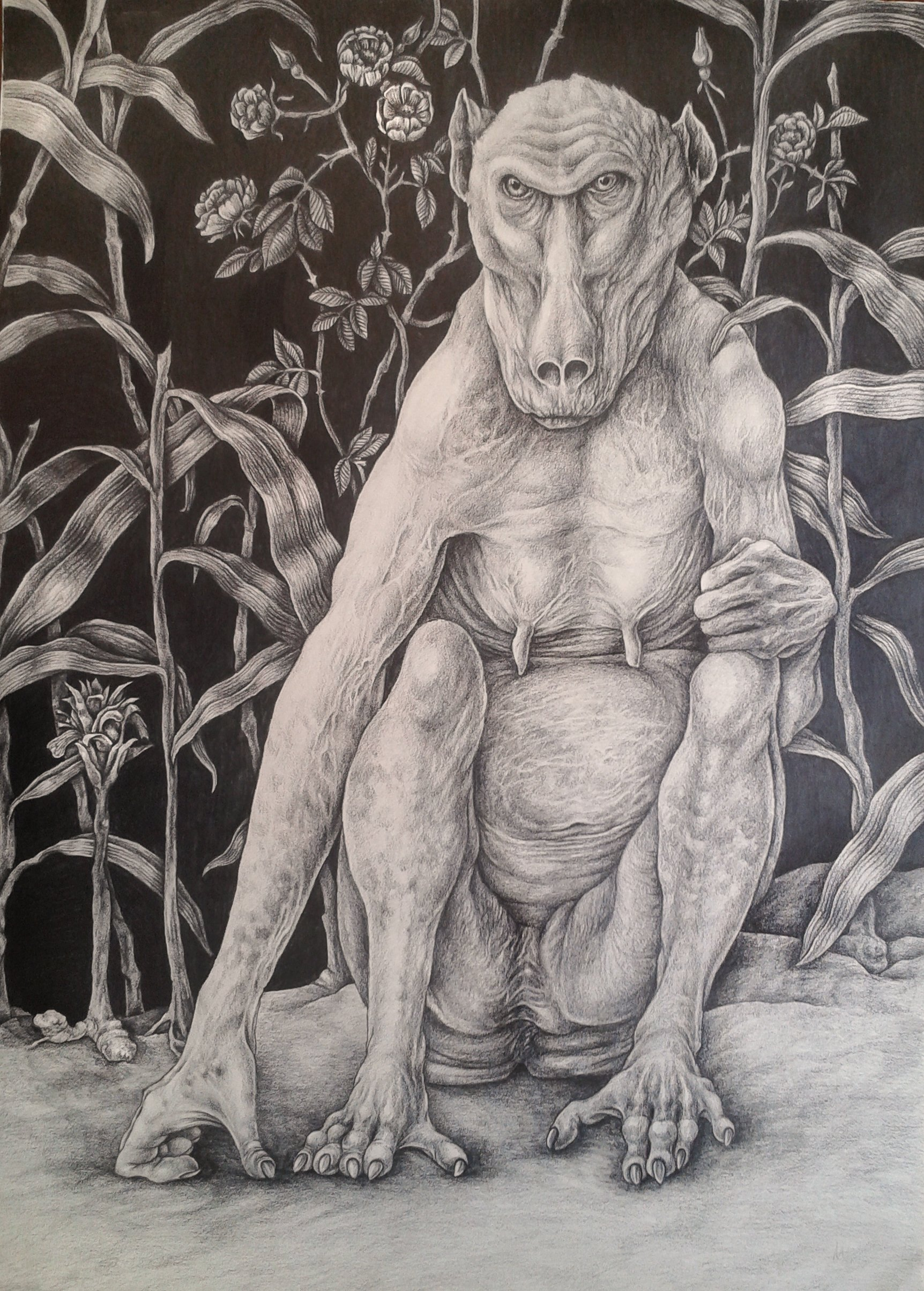 Baboon with roses and gingerplants